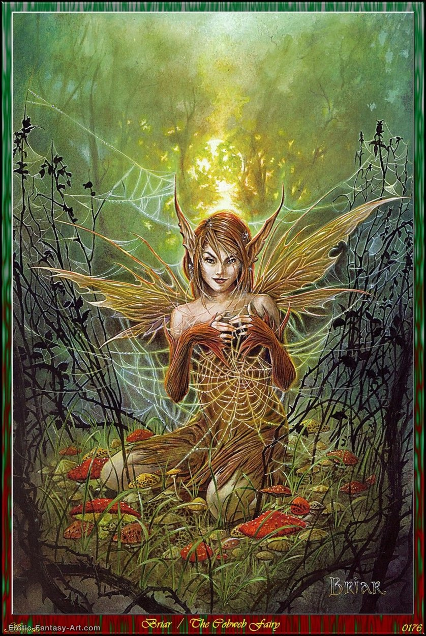 Briar-Briar - the Cobweb Fairy